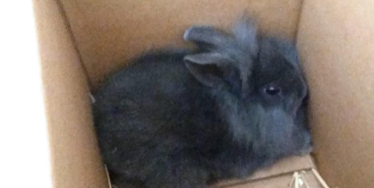 Matan A Un Conejo Durante Una Transmisión De Radio En Vivo En Dinamarca Cnn