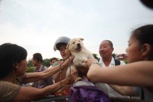 Festival Carne Perro China