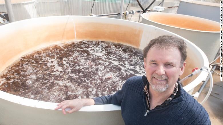Chris Langdon ha estado cultivando y estudiando dulse en el Hatfield Marine Science Center en Newport, Oregón, durante décadas y ahora está trabajando con el Food Innovation Center en Portland para crear platillos saludables y atractivos.