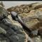 orca varada canadá