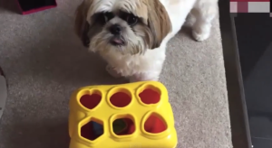 Cooper perro genio