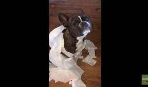 Perro soplón video viral