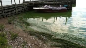 Algas por La Mancha vuelve el agua tóxica