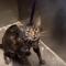 Gato maúlla dice no más