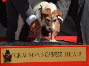 Uggie plantando sus huellas frente al Grauman's Chinese Theatre de Hollywood, el 25 de junio de 2012. (Crédito: ROBYN BECK/AFP/GettyImages)
