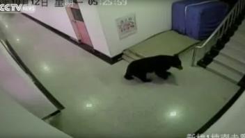 Oso negro escuela china aterroriza estudiantes matan