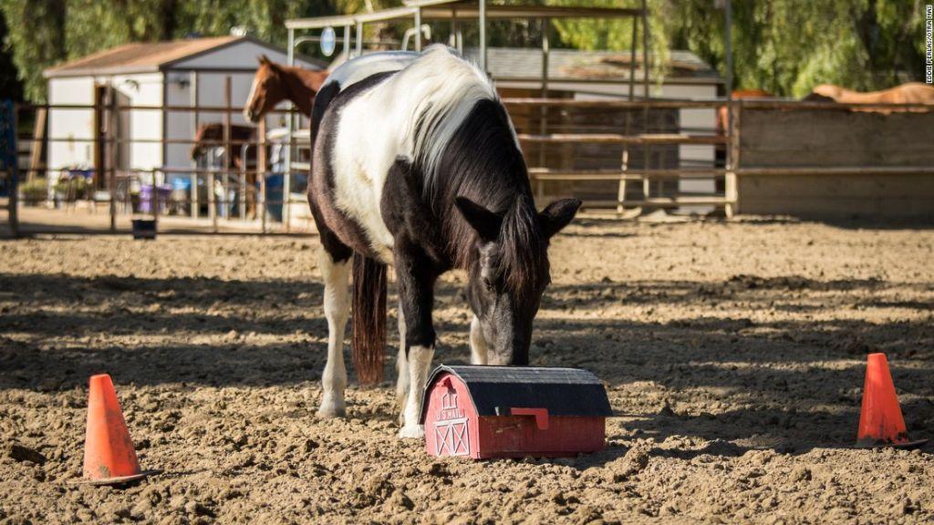 Un caballo empuja un accesorio en el Ortega Center en San Juan Capistrano, California.