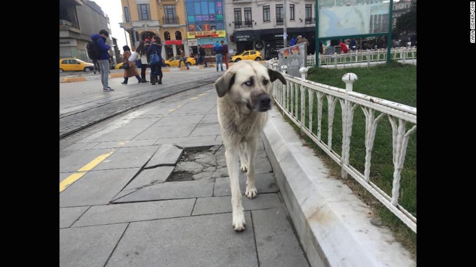 Un perro callejero camina en la plaza Taksim, Estambul.