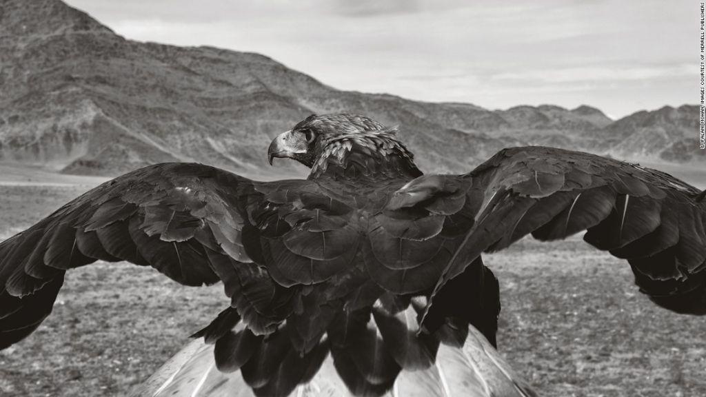 Las águilas a menudo están en movimiento, lo que hace que obtener el momento para la imagen perfecta sea una tarea difícil.