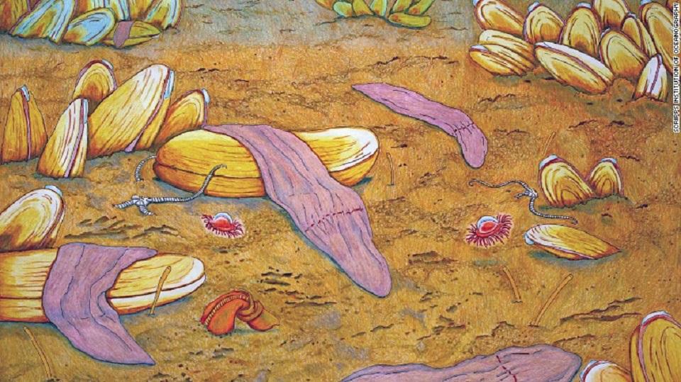 Pintura al pastel de Xenoturbella monstrosa, una de las cuatro nuevas especies del gusano de aguas profundas.