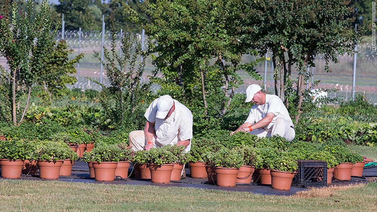 Prisioneros de la correccional Limestone aprenden horticultura como parte del programa Second Chance Pell.