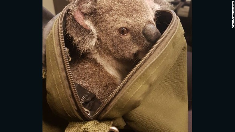 161107161033-australia-police-koala-in-bag-exlarge-169