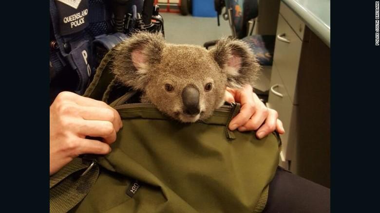 161107162434-australia-police-koala-in-bag-3-exlarge-169
