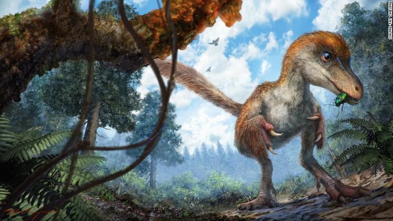 161208121435-dinosaur-amber-1-exlarge-169