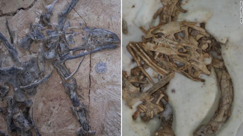 161222125307-limusaurus-skull-split-exlarge-169