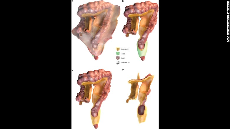 170104134522-02-mesentery-organ-exlarge-169