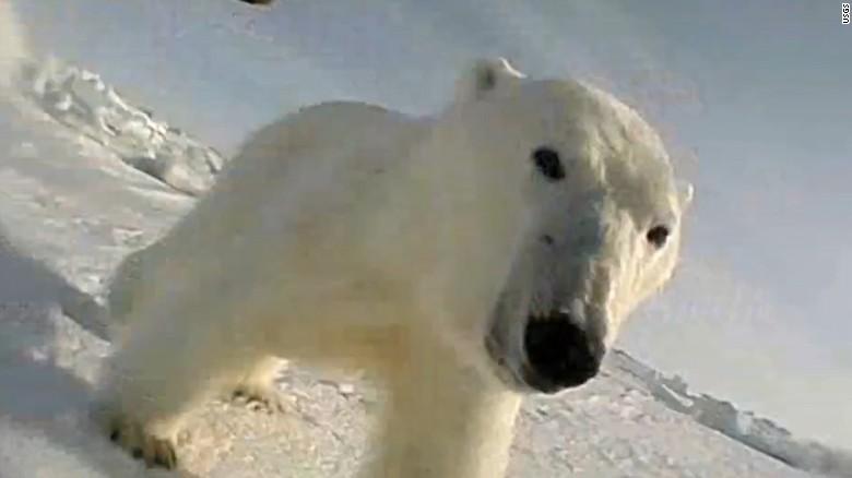 La cámara le permitió a los científicos estudiar los cambios en los comportamientos del animal y sus tasas de alimentación.
