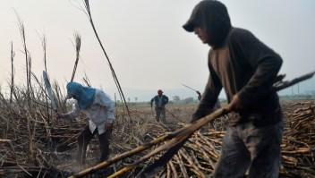 Trabajadores de la caña de azúcar en Atencingo, estado de Puebla, en el sur de México el 11 de mayo de 2017. Crédito: PEDRO PARDO / AFP / Getty Images.