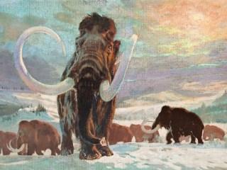 Fotos La Historia De Los Dinosaurios En El Arte Gallery Cnn A diferencia de los dinosaurios, los mamuts y los mastodontes vivieron junto a los seres humanos durante miles de años. historia de los dinosaurios en el arte