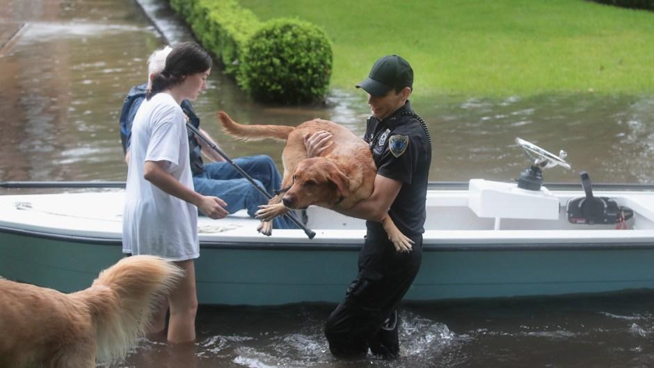 Voluntarios y agentes de la patrulla de seguridad del barrio ayudan a rescatar a residentes y a sus perros en el barrio de River Oaks el 27 de agosto de 2017 en Houston, Texas. Crédito: Scott Olson / Getty Images