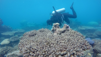 Bleached/Dead corals at Zenith Reef, Nov 2016 during a NCBT survey. Credit: Andreas Dietzel