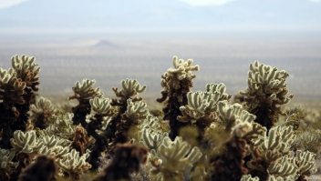 Vista de unos cactus en el Joshua Tree National Park en 2008. (Crédito: GABRIEL BOUYS/AFP/Getty Images)