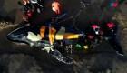 Operativo de rescate de ballena varada en Mar del Plata