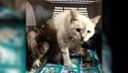 Rescatan a gata que habría sido maltratada por futbolistas venezolanos