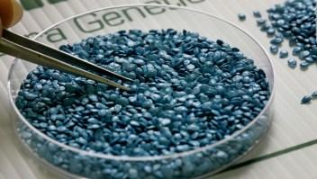 La batalla 2.0 de los alimentos genéticamente modificados