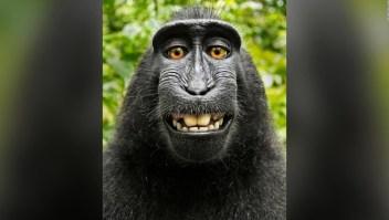 #LaImagenDelDía: Naruto se queda sin los derecho de su selfie