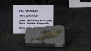 #ElDatoDeHoy: hallan antiguos fósiles de un pez y una mosca