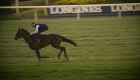 Winx: la niña bonita de las carreras de caballos de Australia
