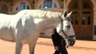 Estos caballos escoltarán al príncipe Enrique y Meghan Markle en su boda