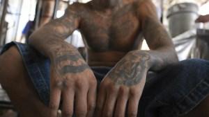 Más presión contra la pandilla MS-13 en Long Islad, Nueva York