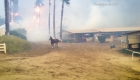 Greyvitos: de las cenizas de Lilac a correr en el Kentucky Derby