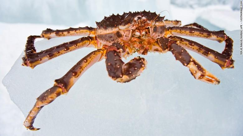 Un número de operadores turísticos ofrecen safaris de cangrejo real a Kirkenes, en la frontera con Rusia, entre diciembre y abril