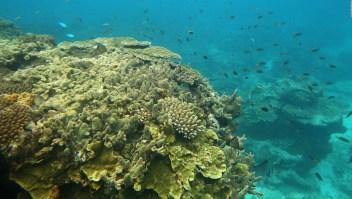 Minuto Clix: tecnología de punta para salvar la Gran Barrera de Coral