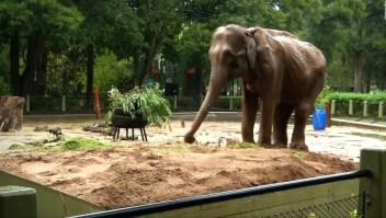 La elefante Ruperta muere a los 48 años en el Zoológico de Caracas