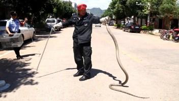 Sacan una cobra gigante de un auto en China