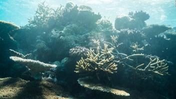 La batalla para salvar la Gran Barrera de Coral en Australia