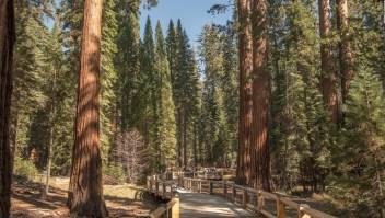 Reforman la casa de las secuoyas gigantes en Yosemite
