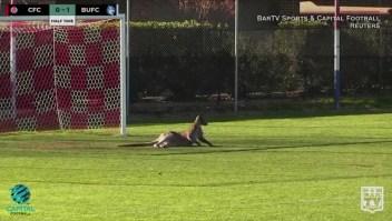 Canguro invade un partido de fútbol en Australia