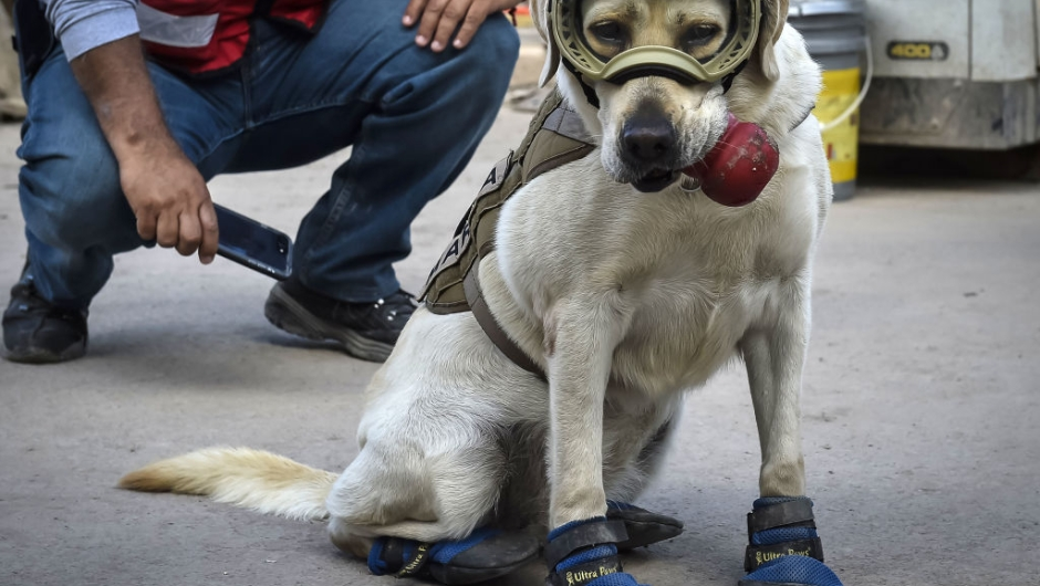 Frida, a rescue dog belonging to the Mexican Navy, with her handler Israel Arauz Salinas, takes a break while participating in the effort to look for people trapped at the Rebsamen school in Mexico City, on September 22, 2017, three days after the devastating earthquake that hit central Mexico. / AFP PHOTO / OMAR TORRES (Photo credit should read OMAR TORRES/AFP/Getty Images)