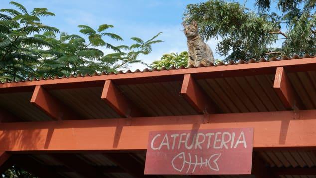 Fundada en 2009, el santuario sin fines de lucro fue una creación de Kathy Carroll, quien vio la necesidad de proporcionar refugio a la floreciente población de gatos callejeros de la isla, así como proteger a las aves en peligro de extinción.