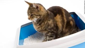Un estudio relaciona un parásito en las heces de gato con las características de personalidad que se encuentran en los empresarios.