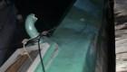Guatemala: detienen submarino posiblemente usado para el tráfico de drogas