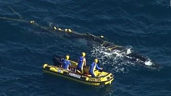 Australia: Ballena atascada por fin es liberad