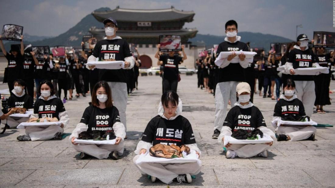 ¡No más carne de perro en las mesas surcoreanas!