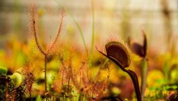 Las plantas carnívoras se apoderan de Bogotá