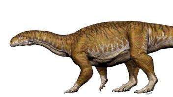 Así descubrieron el primer dinosaurio gigante en Argentina
